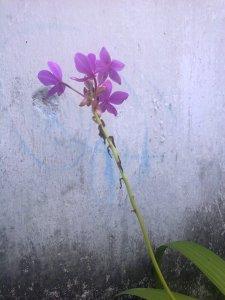 Foto0231