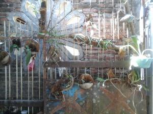 Media tempel sabut kelapa diletakkan pada tempat yang teduh namun cukup terang