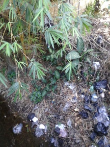 Sisi sungai yang dipaksa menjadi tempat sampah