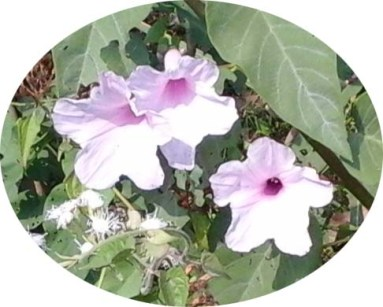 3-bunga