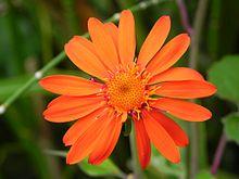 Orange bidens