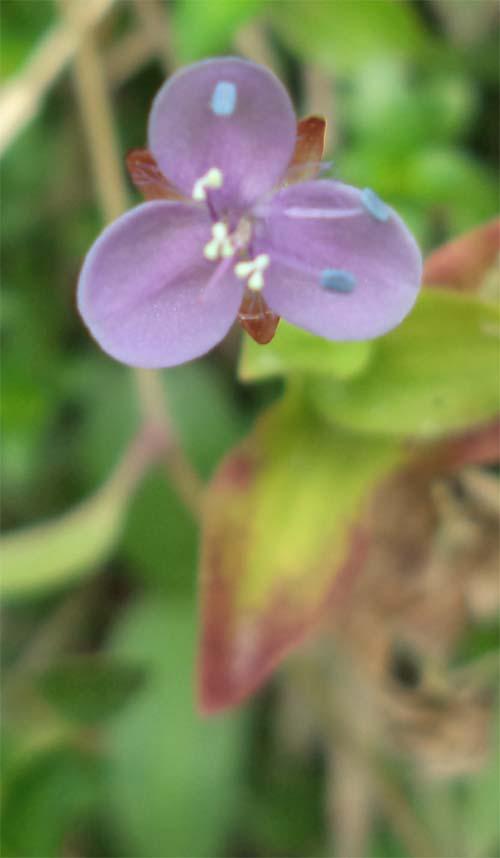 bunganya