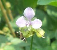 bunga 1