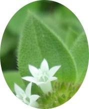 bunga n daun