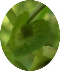 bunga3