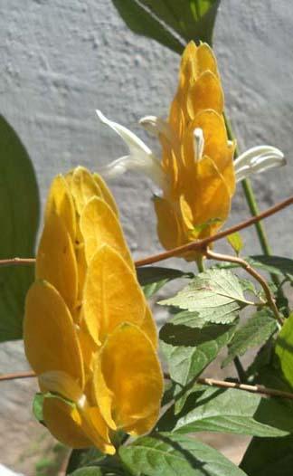 bunga2