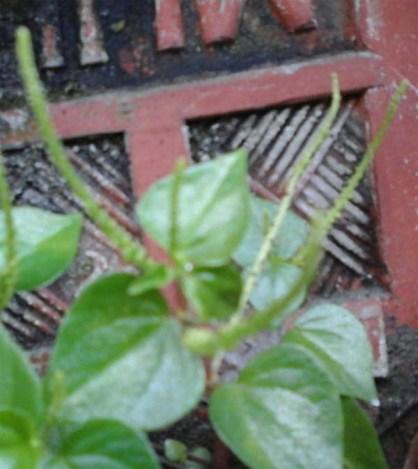 daun-bunga-dan-batang