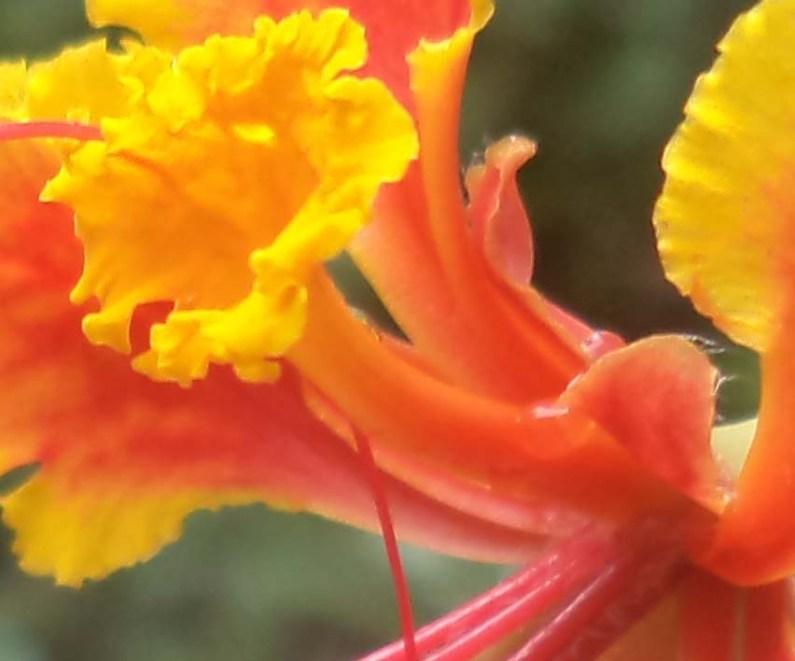 petal abung