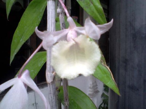 bunga-cacat