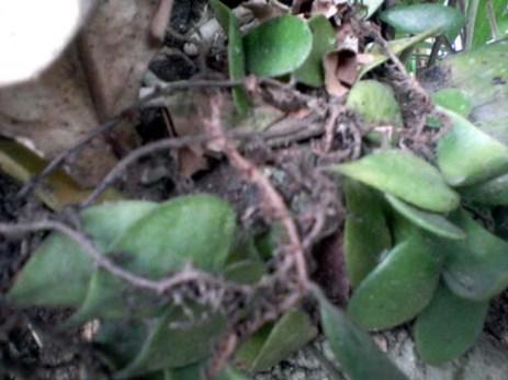 daun batang akar2