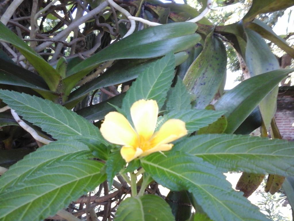 Bunga Liar Bluepurplegarden